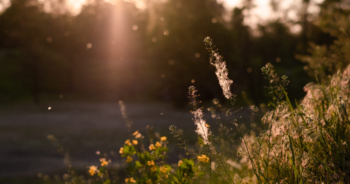 Pollen Covid-19